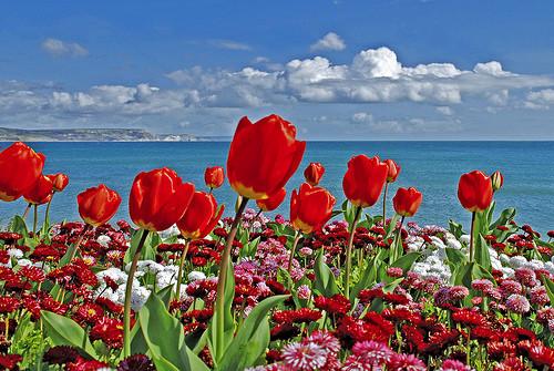 Le pouvoir des fleurs....