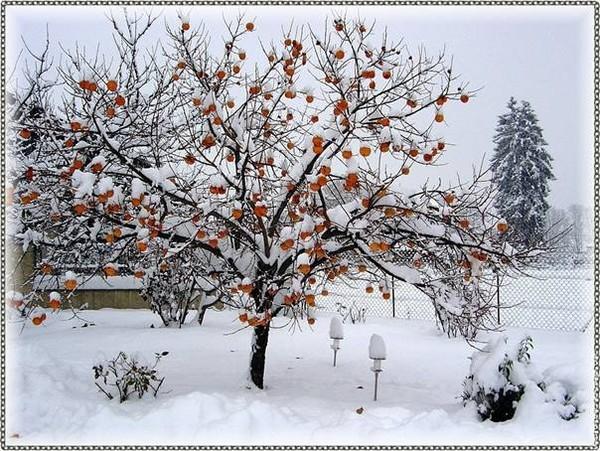 un monde hivernal